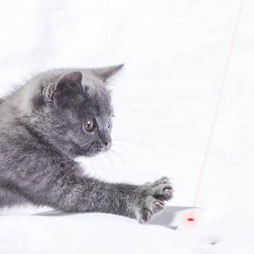 meilleur pointeur laser pour chat