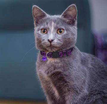 meilleur collier pour chats