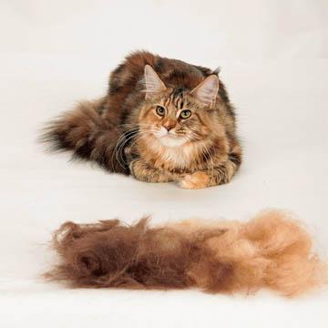 meilleure brosse pour chat
