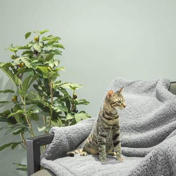 conseils d'entretien pour chat
