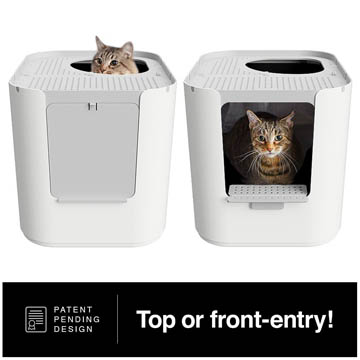 Guide de la litière pour chats